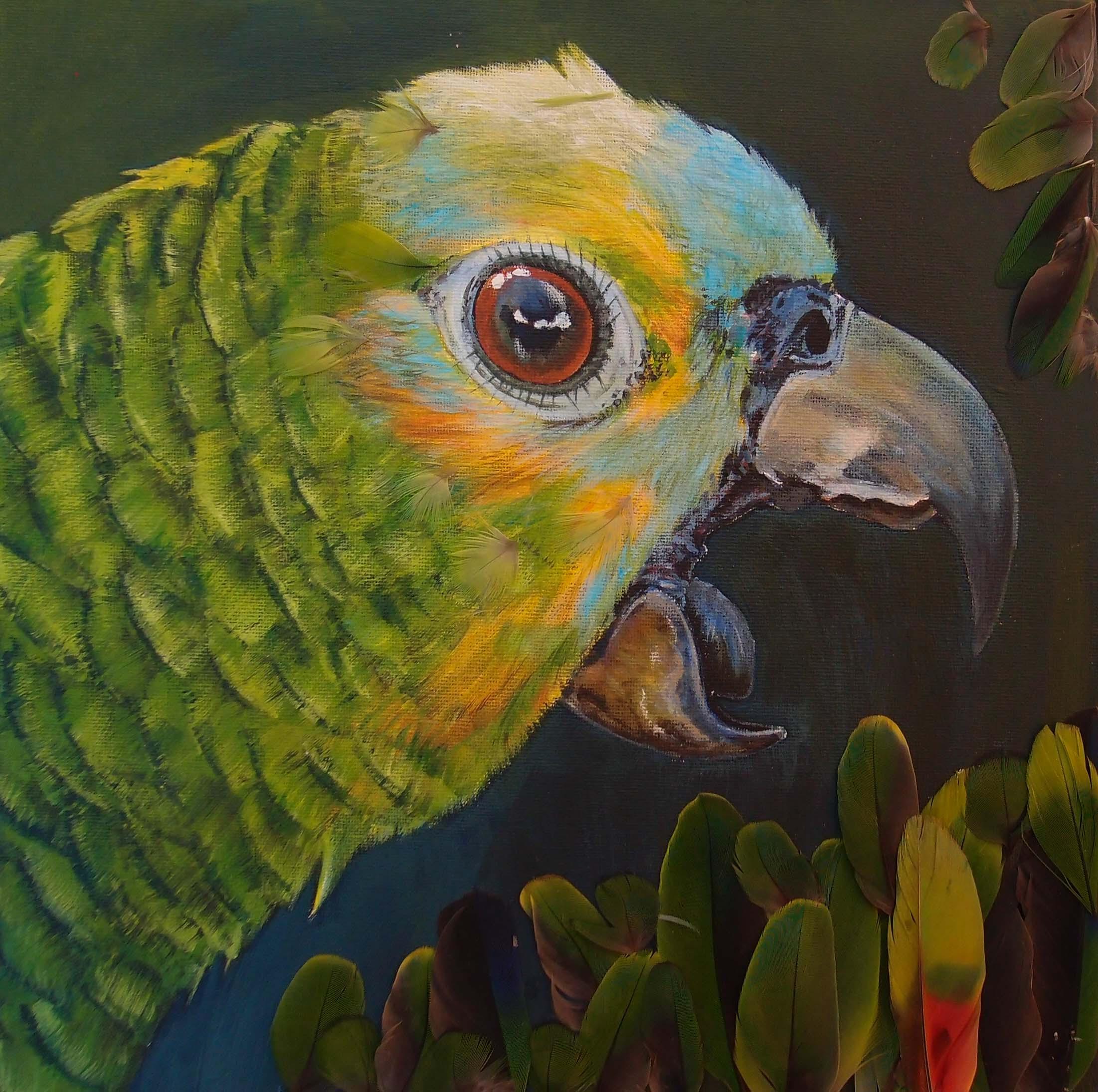 parrotlrjpg